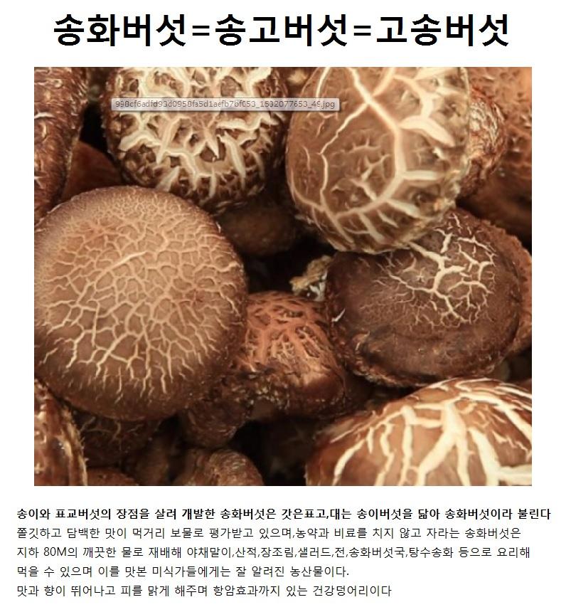 송화버섯이란.jpg